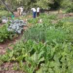 Harvest time at Siyamnaka Youth Centre_resized