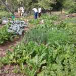 Harvest time at Siyamnaka Youth Centre_resized