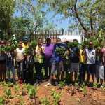 Harvesting at Balebogeng Higher Primary_resized
