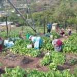 Harvesting at Siyamnaka_resized