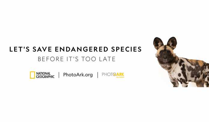 2018---PhotoArkOOH---South-Africa_Rhino--1170x-680