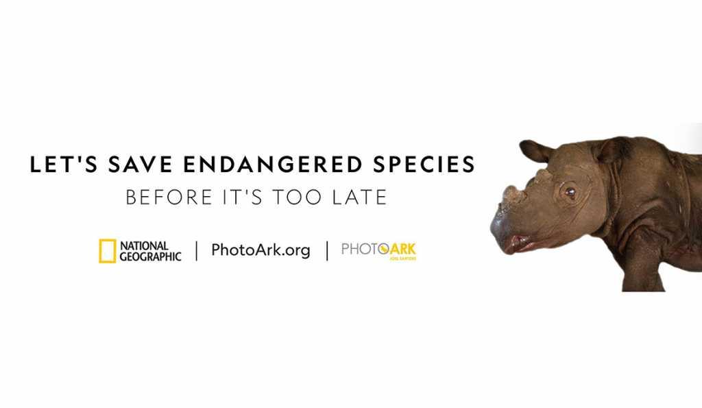 2018---PhotoArkOOH_South-Africa_Rhino_1170x680-